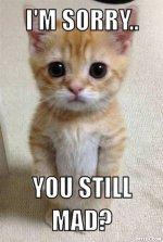resized_kitty.jpg